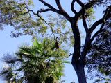 Вот и обезьяна / Бразилия