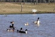 Птицы на воде / Уругвай