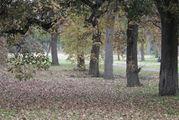 Деревья вдоль аллеи / Уругвай