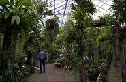 Тропический сад / Нидерланды