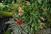 Растения в период цветения / Нидерланды