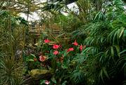 Малайзийский сад / Нидерланды