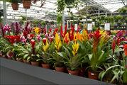 Магазин с растениями / Нидерланды