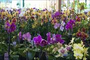 Комнатные растения / Нидерланды