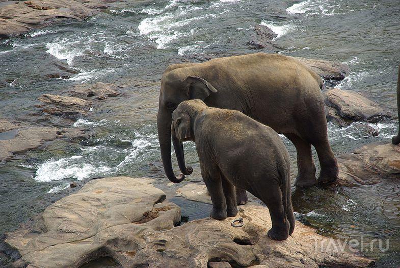 Слоны на водопое / Замбия
