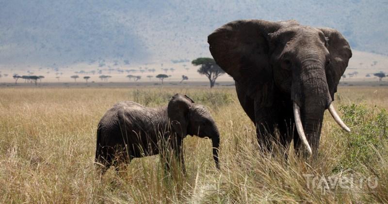 В национальном парке Масай Мара / Замбия