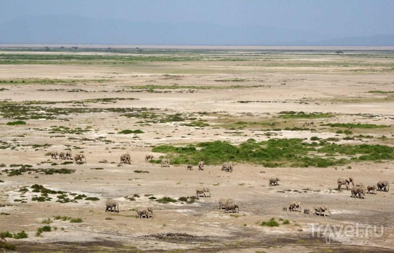 В Амбосели. Вид с холма / Замбия