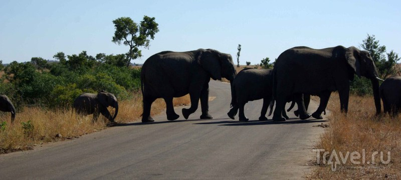 Переходят дорогу / Замбия