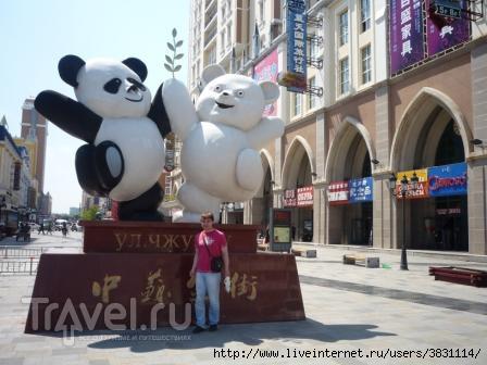 Дружба медведей / Китай