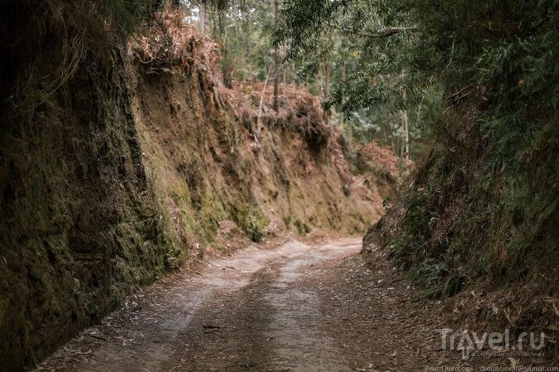 Обычная лесная дорожка / Португалия