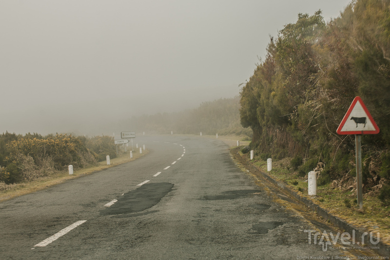 Коровы в тумане / Португалия