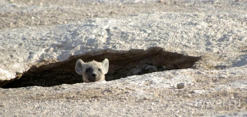 Наблюдает из пещерки / Кения