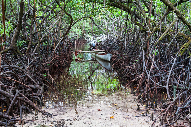На острове Косрае, Микронезия / Фото из Микронезии