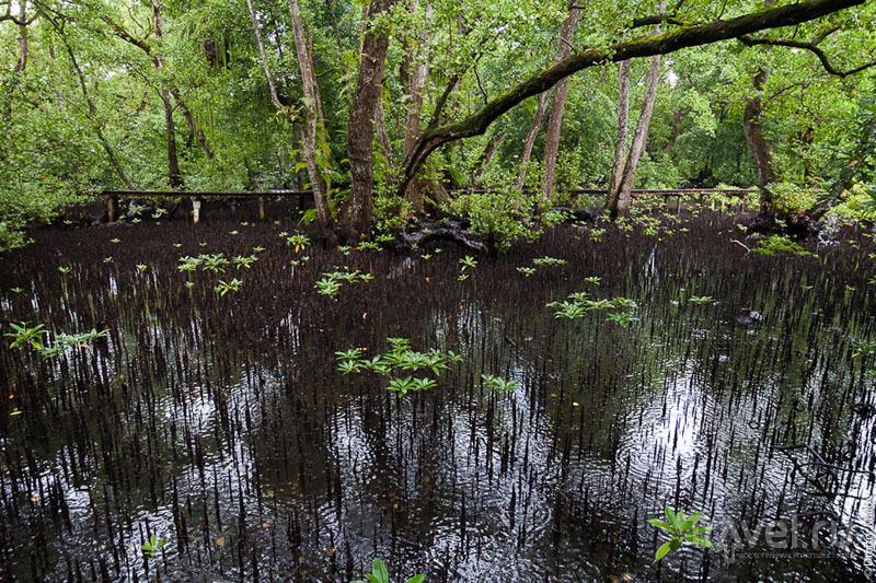Сгоревший мангровый лес на острове Косрае, Микронезия / Фото из Микронезии