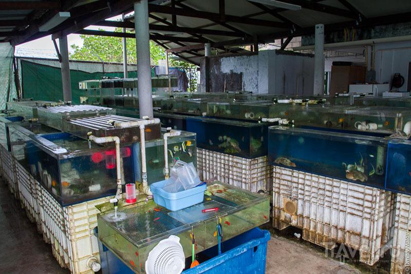 Завод по разведению рыб на острове Косрае, Микронезия / Фото из Микронезии