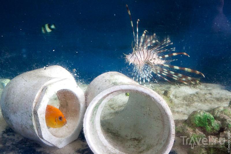 Аквариумные рыбы с острова Косрае, Микронезия / Фото из Микронезии