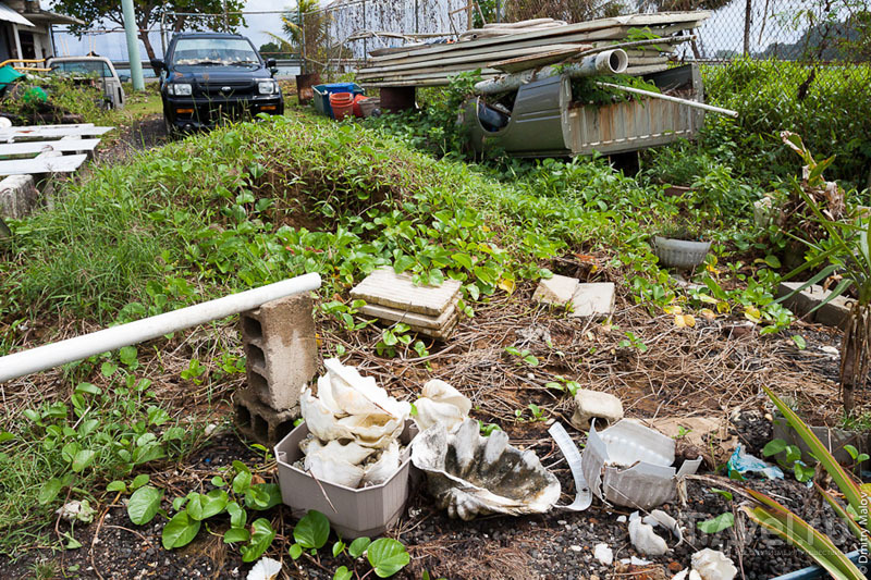 Раковины двустворчатых с острова Косрае, Микронезия / Фото из Микронезии
