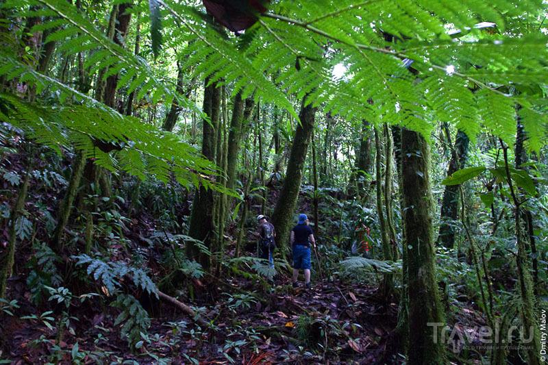 Лес на острове Косрае, Микронезия / Фото из Микронезии