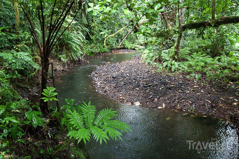 Река на острове Косрае, Микронезия / Фото из Микронезии