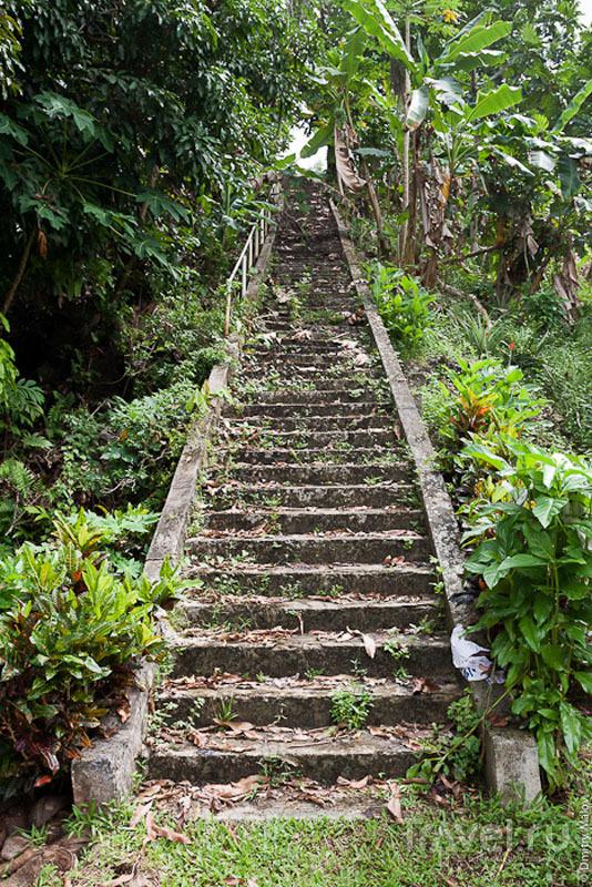 Лестница на острове Косрае, Микронезия / Фото из Микронезии