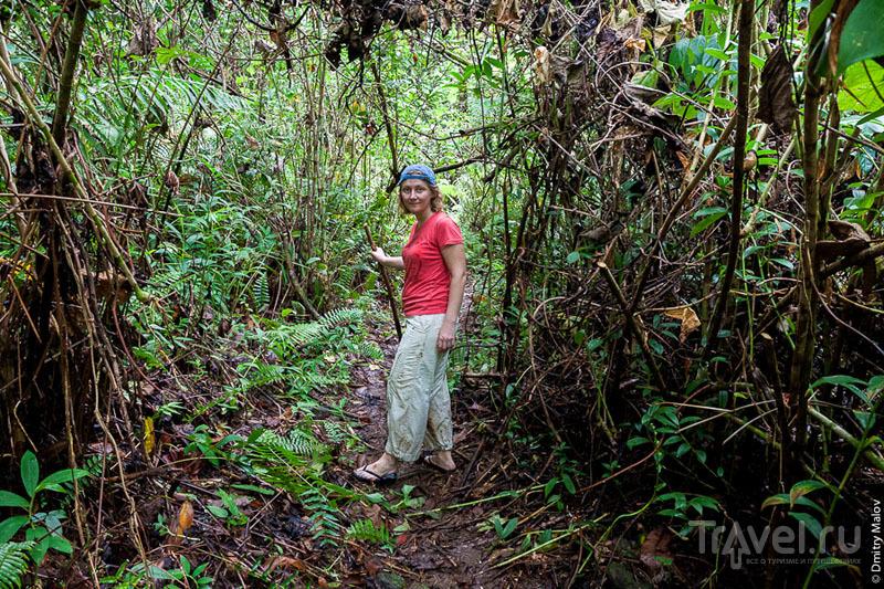 В лесных зарослях острова Косрае, Микронезия / Фото из Микронезии