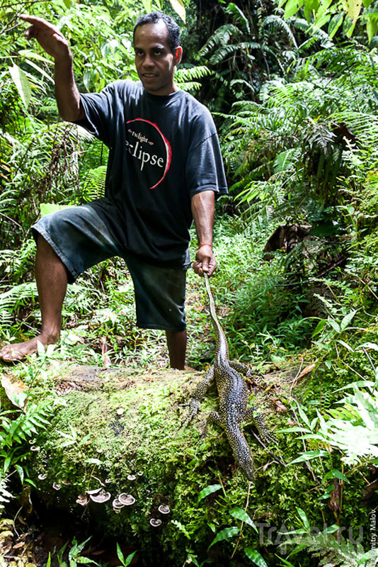 Фауна острова Косрае, Микронезия / Фото из Микронезии