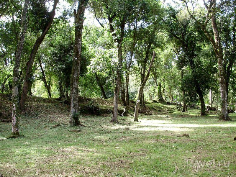 Сад иезуитов (хорта) / Аргентина
