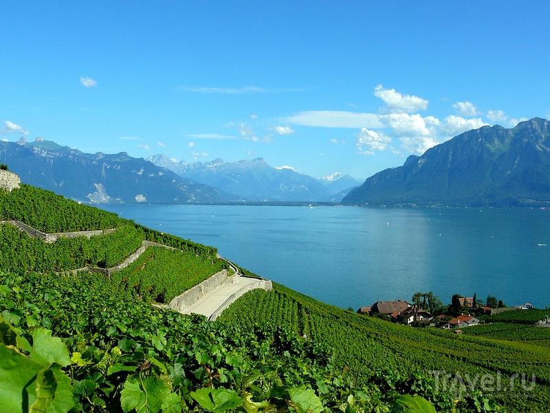 Террасовые виноградники Лаво, Швейцария / Швейцария