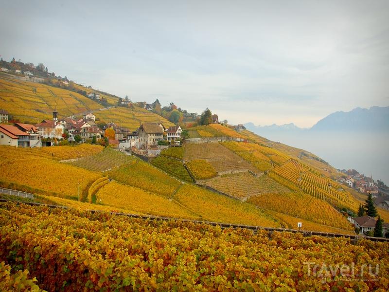 Виноградники, спускающиеся по крутым склонам к берегам Женевского озера, Швейцария / Швейцария
