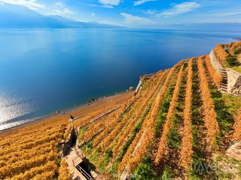 Виноградники Лаво - это узкие террасы с укрепленными каменными стенами, спускающимися к Женевскому озеру / Швейцария