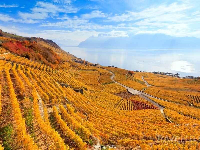 Живописные пейзажи виноградников Лаво, Швейцария / Швейцария