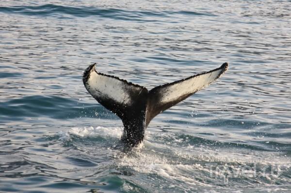 Хвост горбатого кита / Исландия