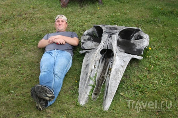 Dead Whale / Исландия