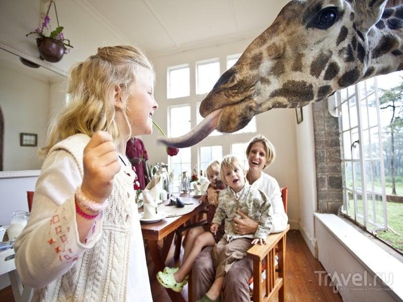 Кормление жирафов в бутик-отеле Giraffe Manor, Кения / Кения