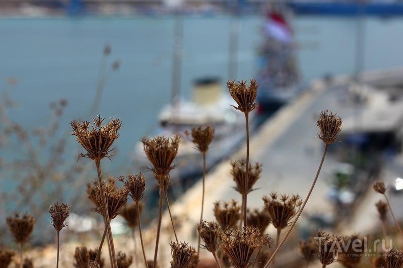 Мальтийская флора / Мальта