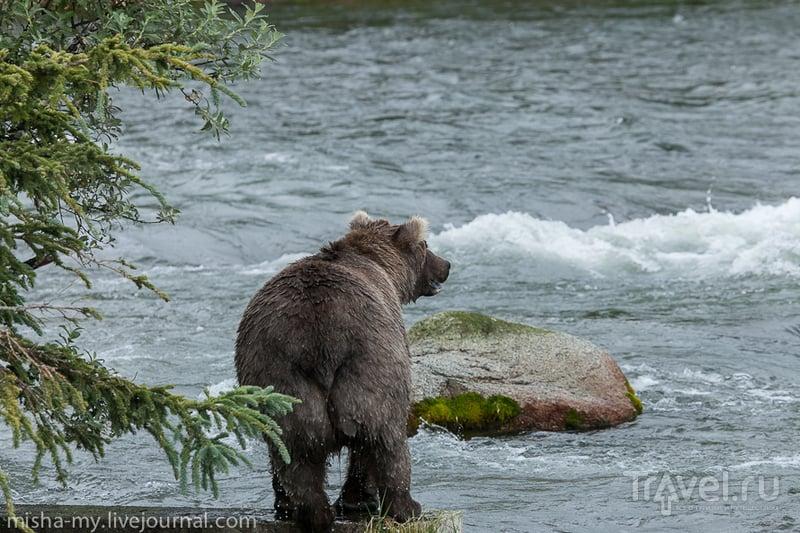 Аляска. Медвежье царство / США