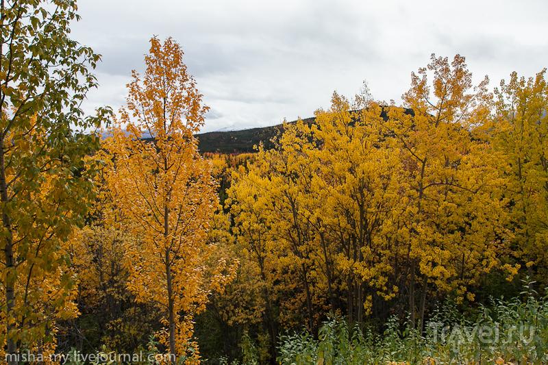 Путешествие на Аляску. Национальный парк Денали / США