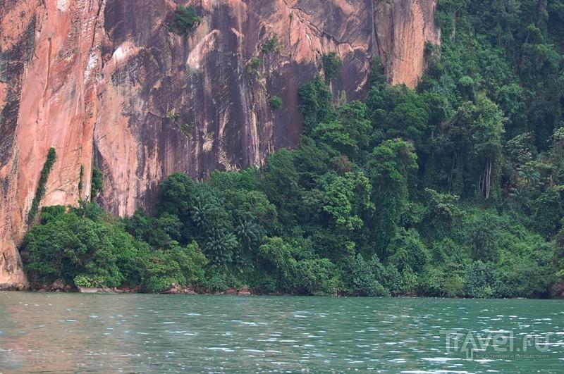 Борнео. Вниз по течению реки Кинабатанган / Малайзия