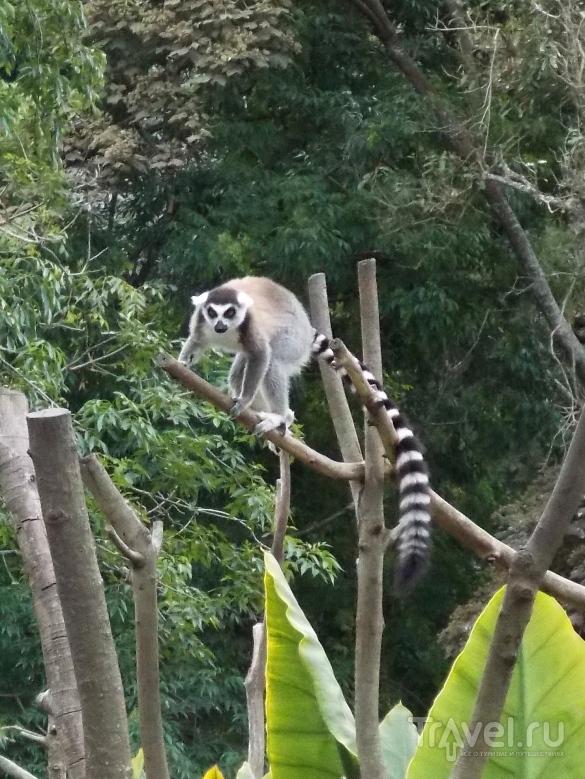 Мадагаскар. Снова лемуры / Мадагаскар