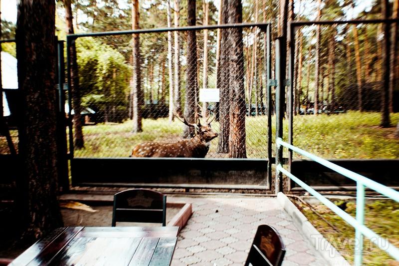 Новосибирский зоопарк / Россия