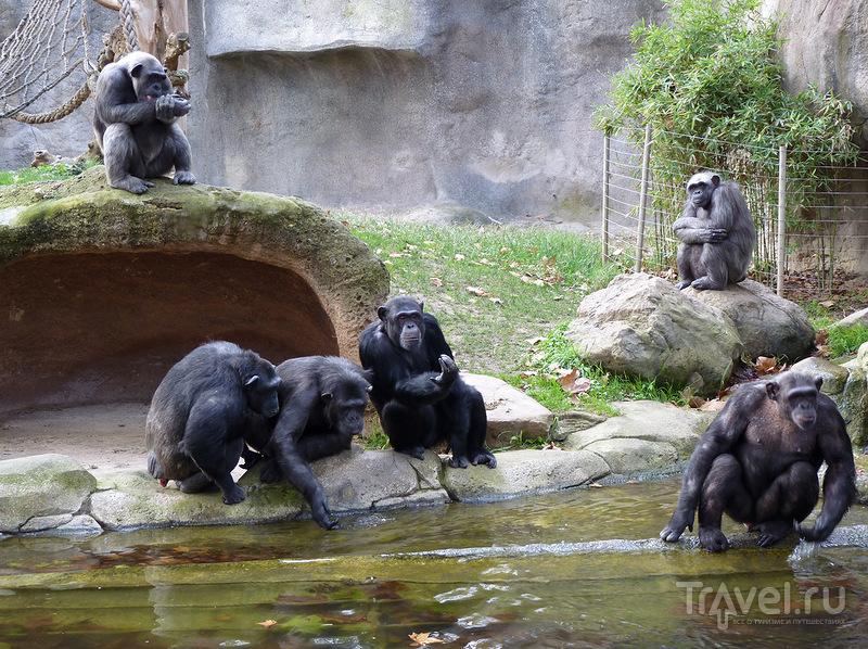 Барселонский зоопарк / Фото из Испании