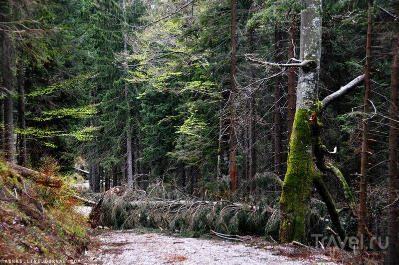 Бавария: Швангау / Фото из Германии
