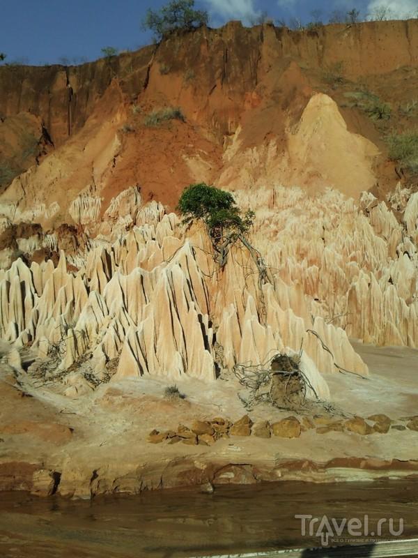 Мадагаскар. Цинги / Мадагаскар
