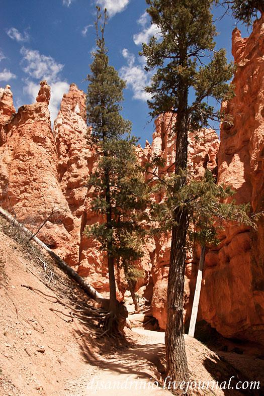 Walking in Bryce Canyon, UT / США