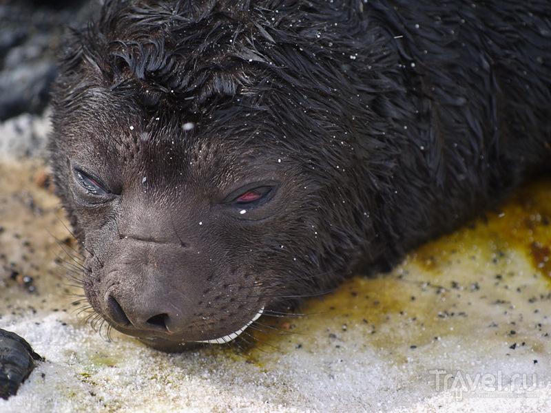 Медленно, словно пугливые, странные звери... / Фолклендские острова