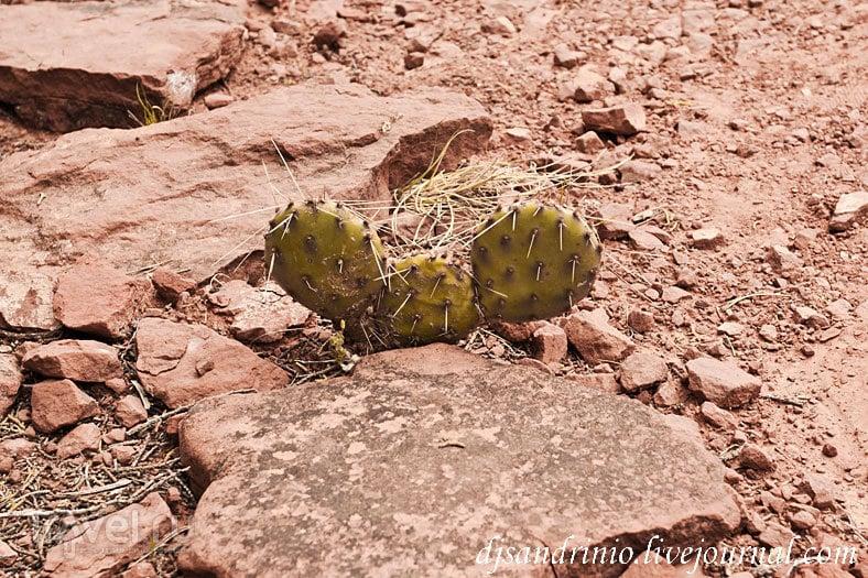 Sedona, Red Rock State Park, AZ / США