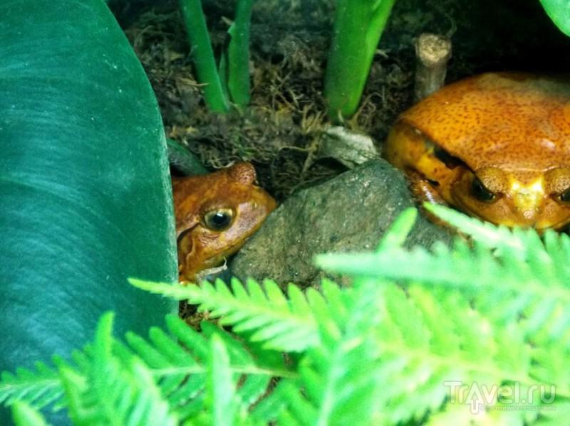 Мадагаскар. Лягушки / Мадагаскар