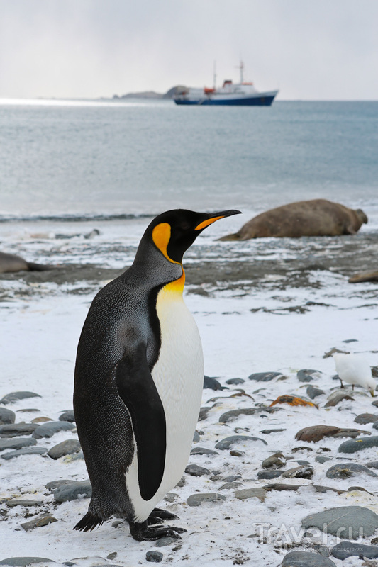 Снилось, как пингвины плавали, тонули, прыгали с трамплина и на дно тянули... / Чили