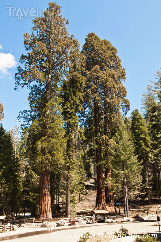 Sequoia National Park / США