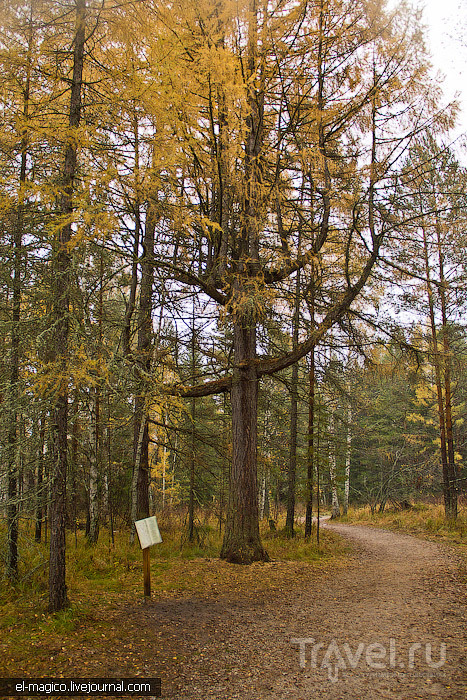 Природный парк Оленьи ручьи - граница тайги и лесостепи возле Екатеринбурга / Россия